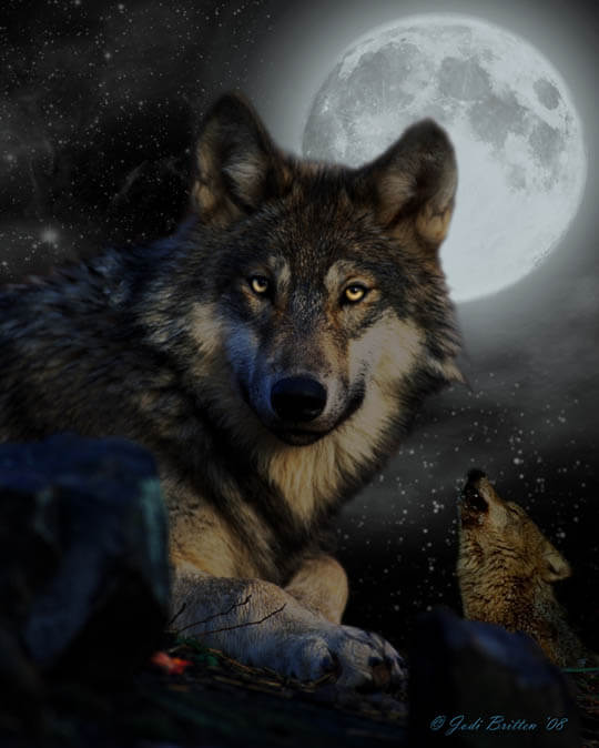 DOG vs WOLF DIFFERENCES - THIS INFO by WWW.PETSWORLD.IN