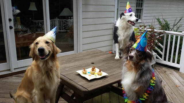 DOG BIRTHDAY PARTY GUESTS