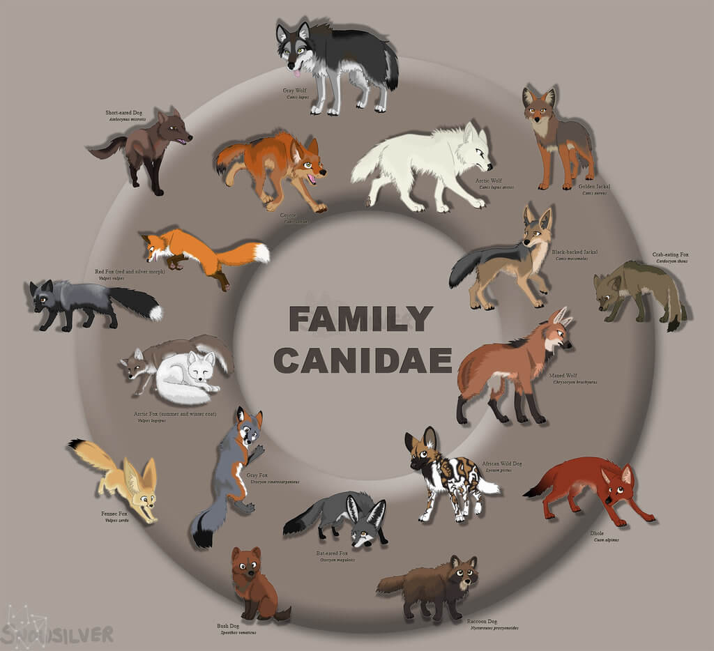 DOG vs WOLF HISTORY & ORIGINS, DOMESTICATION - PRESS TO SEE IN FULL SIZE !!!
