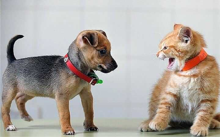 dog and cat, dog vs cat games