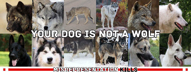 WOLVES & WOLF-DOGS AS PETS, PET DOG vs WOLF