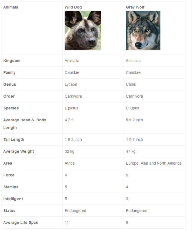 WILD DOG vs GRAY WOLF FIGHT COMPARISON - THIS INFO by WWW.COMPAREANIMAL.COM