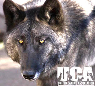 DOG AND WOLF TOLERANCE & AGGRESSION, TRAINING