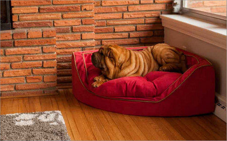 BEST DOG BEDS 2018 by WWW.DOGSBEDZONE.COM