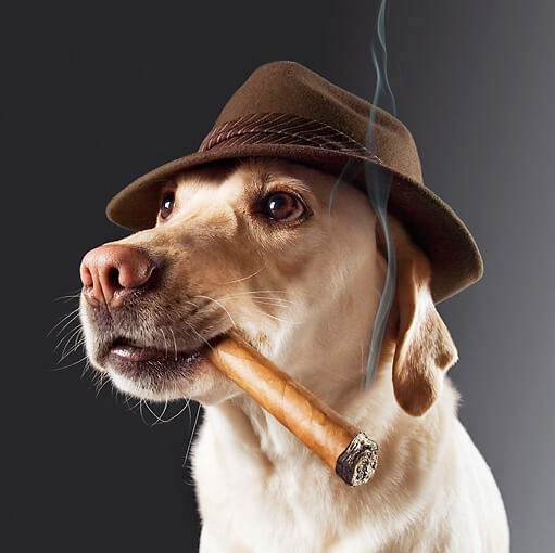 Cigarette & Nicotine Dog and Puppy Poisonous Influence