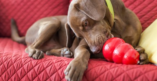 DOG TOYS & GAMES: KONG, SMART PUZZLES