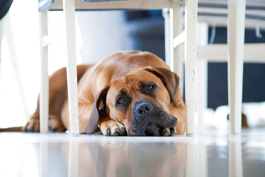 DOG SEPARATION ANXIETY TREATMENT and CURE TIPS & TECHNIQUES