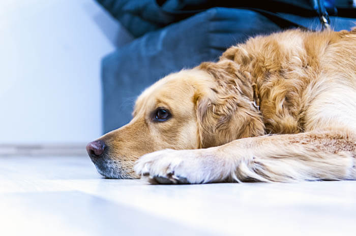DOG SEPARATION ANXIETY CURE TIPS & TECHNIQUES