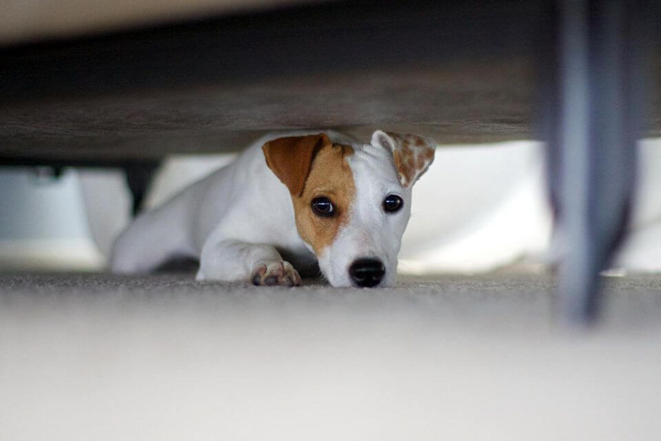 WAYS TO PREVENT PUPPY's SEPARATION ANXIETY