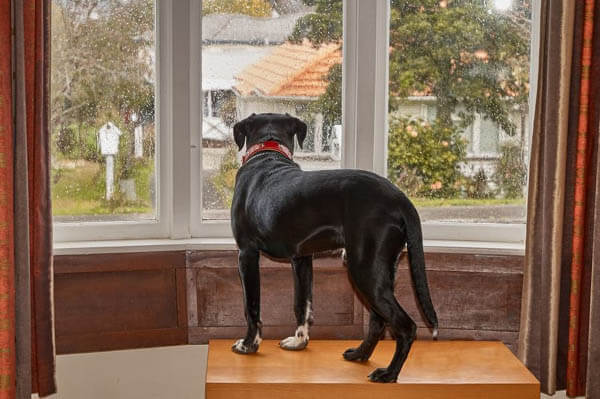 DOG SEPARATION ANXIETY HELP FIGHT TIPS & TECHNIQUES