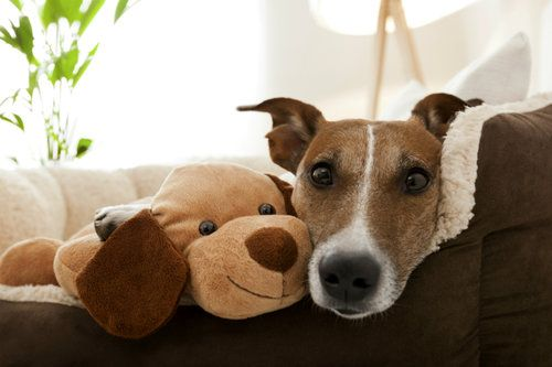 SUPPLIES TO HELP YOUR DOG FIGHT SEPARATION ANXIETY