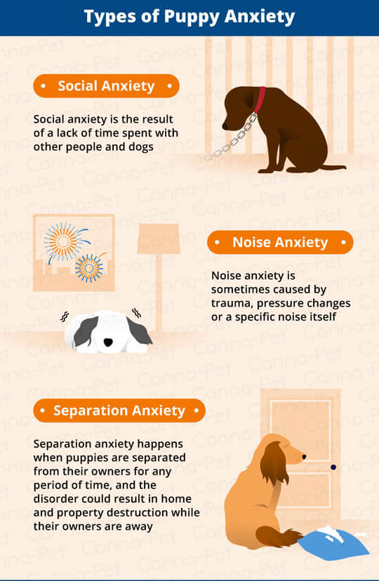 PUPPY SEPARATION ANXIETY SYMPTOMS & SIGNS