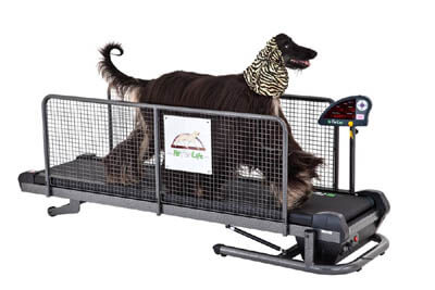 DIY DOG TREADMILL, RUN, TRAINING A DOG