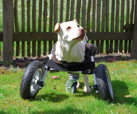 DIY HOMEMADE HOW TO MAKE GUIDE DOG WHEELCHAIR FOR PARALYSED & DISABLED DOGS