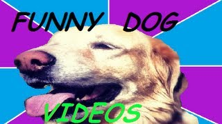 WATCH DOG & PUPPY VIDEO !!!
