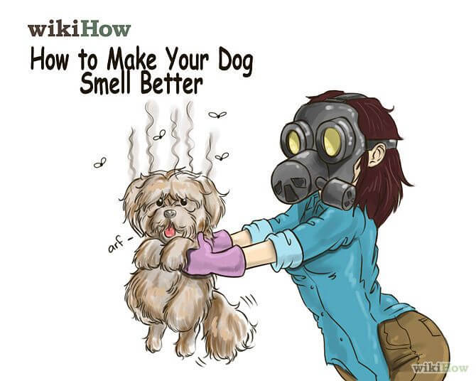 HOMEMADE DOG ODOR / SMELL REMOVER
