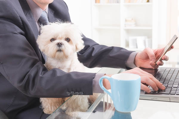 WORKING DOGS - BRING YOUR FIDO TO THE OFFICE