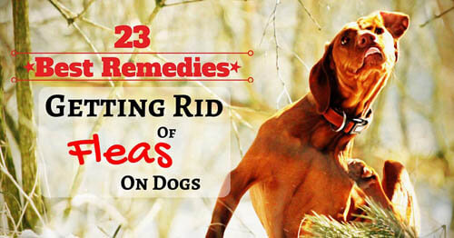 Dog Fleas, Mites and Ticks HOME & YARD PREVENTION METHODS & REMEDIES