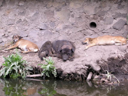 ZOOS WHERE TO SEE WILD DOGS