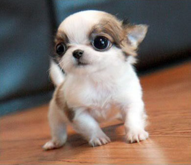 1000 Cute Puppies O Dogica Enjoy Adorable Funniest Flawless Cutest Dog Breeds Unbelievable Pictures Gallery