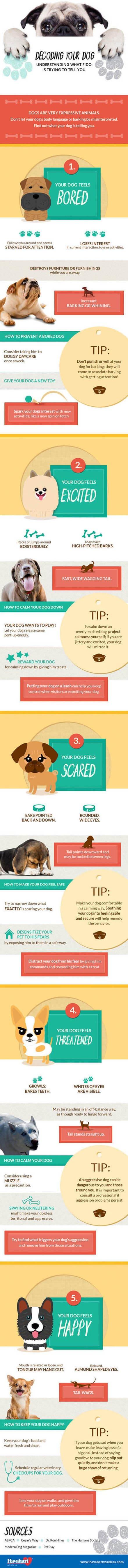 DOG BODY LANGUAGE INFOGRAM, INFOGRAPHICS - BY Rebecca OConnell - CLICK TO SEE IN FULL SIZE !