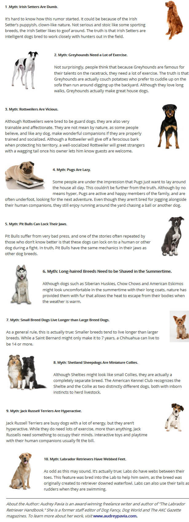 DOG BREED MISCONCEPTIONS