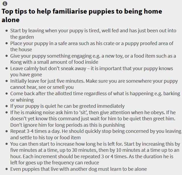 PUPPY SEPARATION ANXIETY TIPS by WWW.THEVETERINARYEXPERT.COM