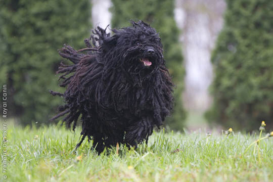 SMALL & BIG PULI