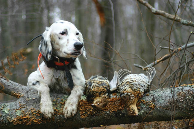 GUN DOG TERMS