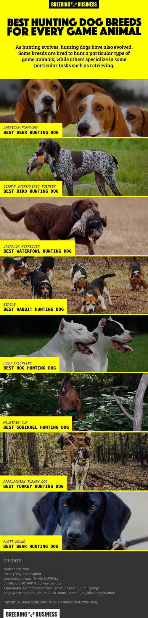 BEST HUNTING DOGS FOR EACH GAME