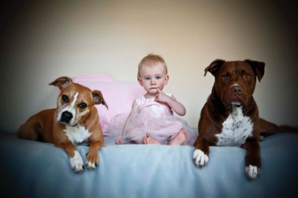 DOG BREED MISCONCEPTIONS -PITBULLS