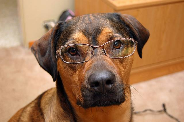 DOGGLES (DOG EYE GLASSES) MEASUREMENT GUIDE & INSTRUCTIONS - HOW TO MEASURE DOG GLASSES