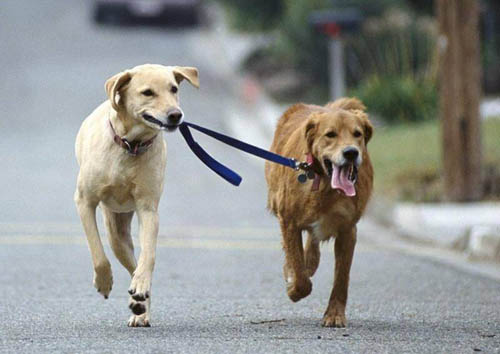 WALKING DOGS MISCONCEPTIONS