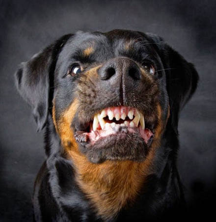 DOG BREED MISCONCEPTIONS - ROTTWEILERS