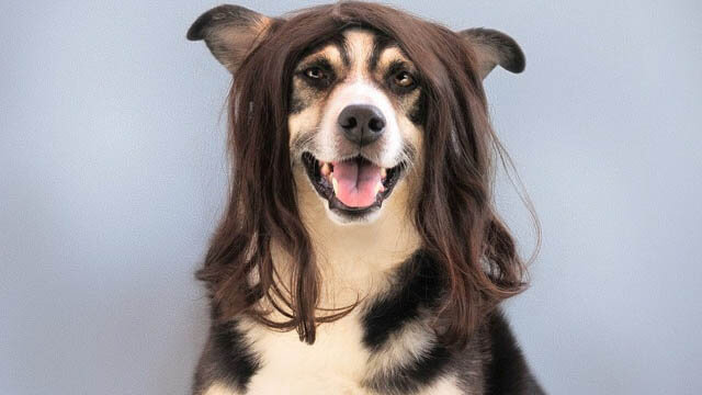 DOG COSMETICS, SHAMPOOS AND CONDITIONERS
