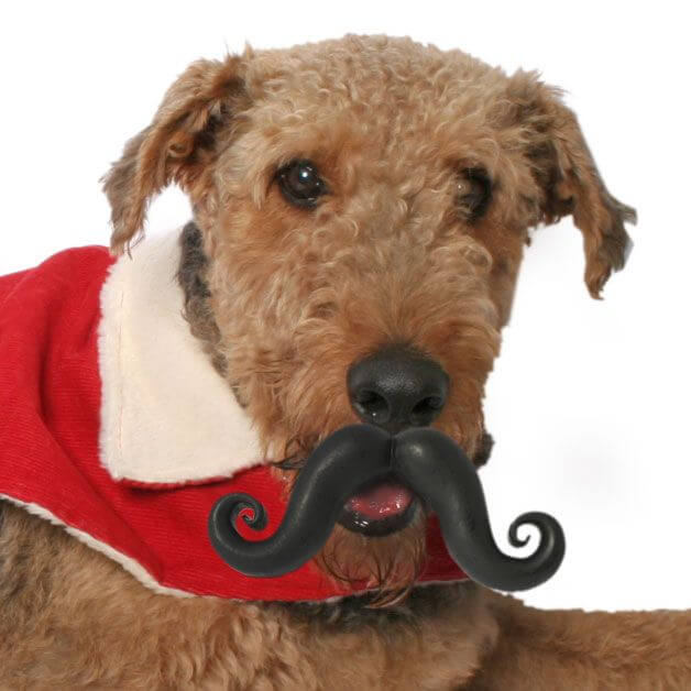 DOG WHISKERS, MOUSTACHE & MUSTACHE PHOTOS COLLECTION