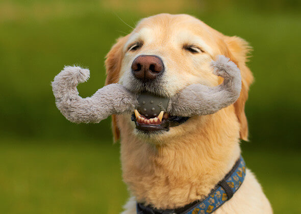 DOG WHISKERS, MOUSTACHE & MUSTACHE DOG TOYS