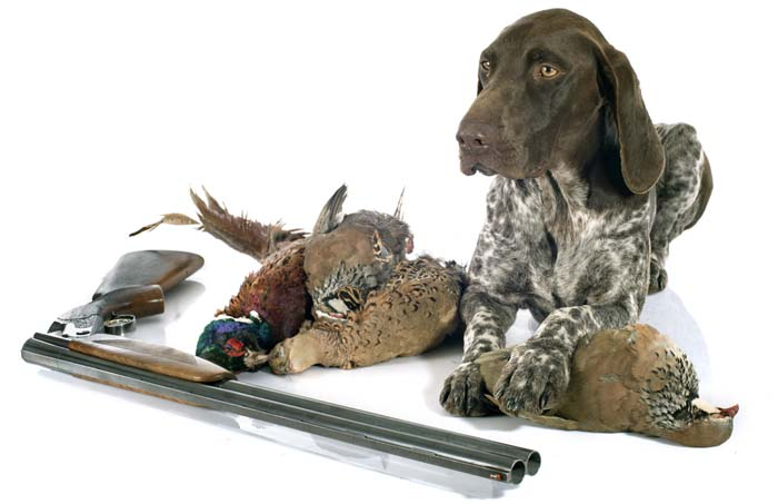 HUNTING GUNDOG SUPPLIES LIST