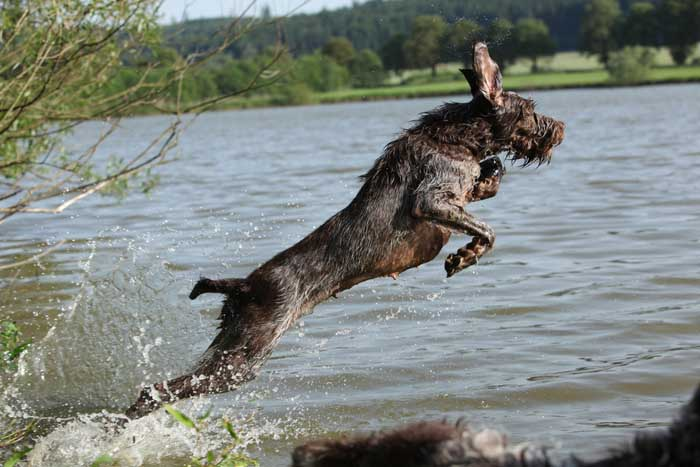 HUNTING GUNDOGS BREEDS