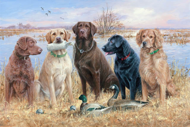 HUNTING GUNDOG FEEDING TIPS