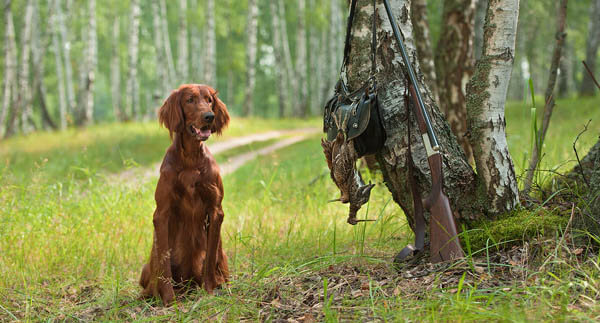 HUNTING DOGS CARE