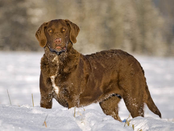 HUNTING GUNDOG CARE