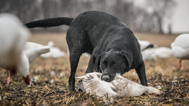 PHOTOS OF HUNTING DOGS