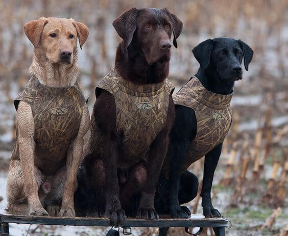 THE CATEGORIES of HUNTING DOGS