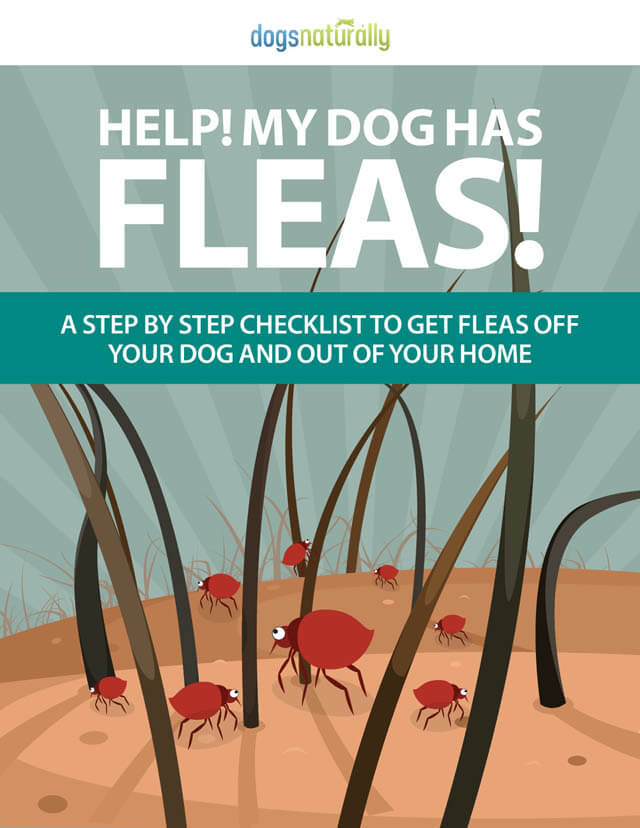 DOG FLEAS, WORMS, MITES & TICKS REMEDIES PILLS TREATMENT CARE CHECKLIST