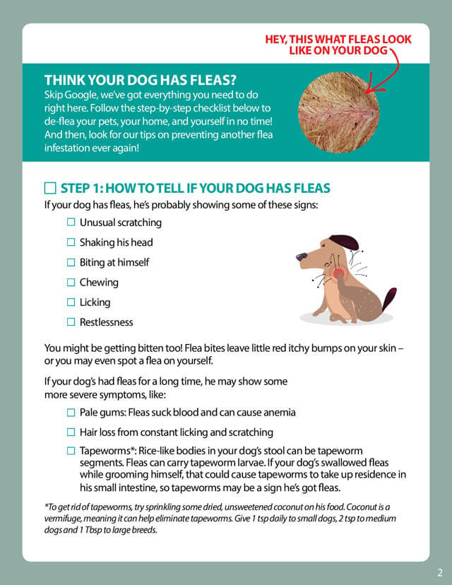 DOG FLEAS  REMEDIES PILLS TREATMENT CARE CHECKLIST by DOGSNATURALLYMAGAZINE.COM