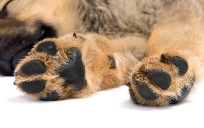 DOG PAW TYPES & VARIATIONS