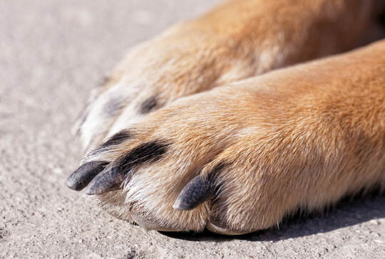 HOW TO DETERMINE DOG'S PAW PREFERENCE ?