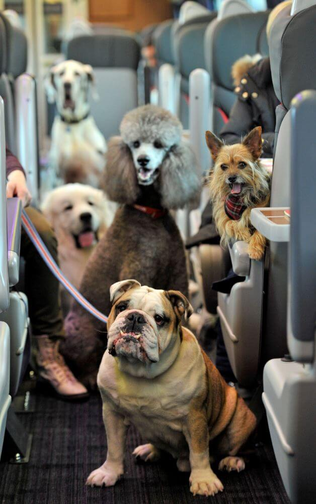 DOG TRAVEL, RIDE, TRIP, CAR, BIKE, AIRPLANE JOURNEY