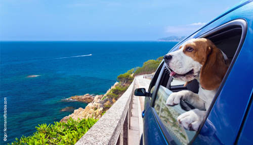 TRAVELING WITH YOUR DOG HACKS TIPS, GUIDE, MANUAL, INSTRUCTIONS